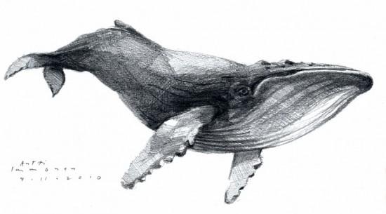 whale_pencil